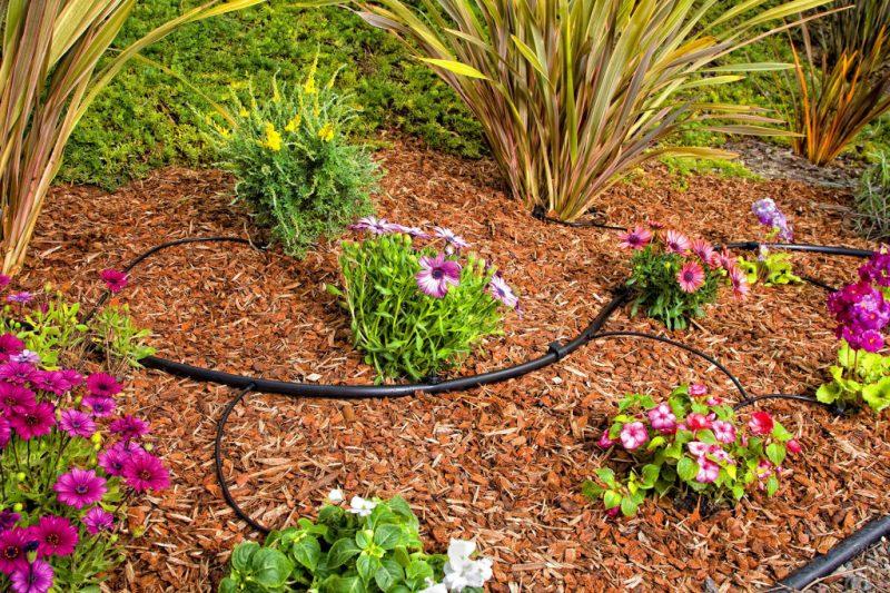 Полив растений в саду