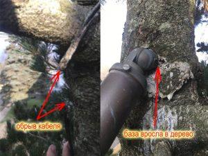 Светильник на дереве